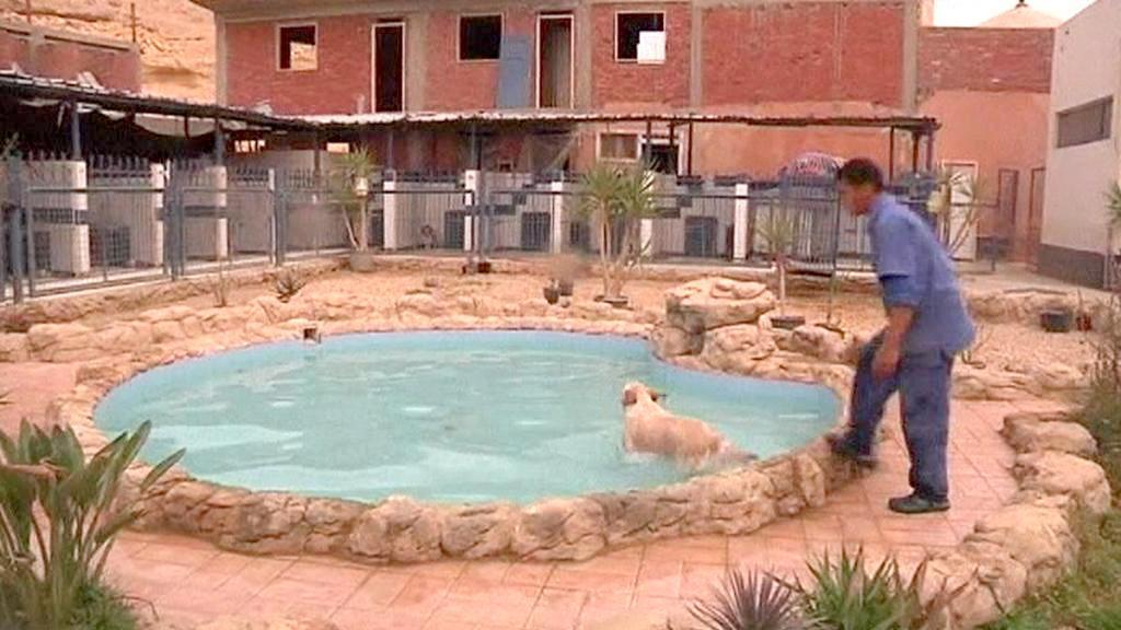 Bazén psího hotelu