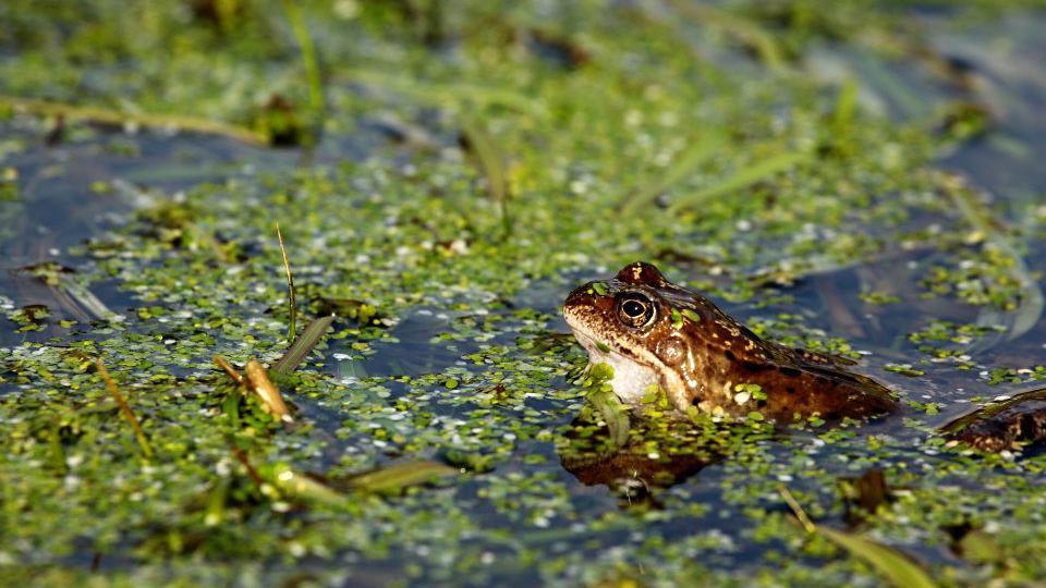 Žabí trdliště