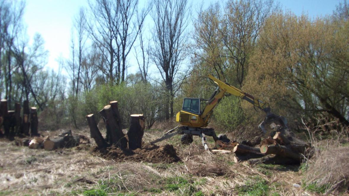 Těžké stroje stěhují dřevo z rozřezané aleje