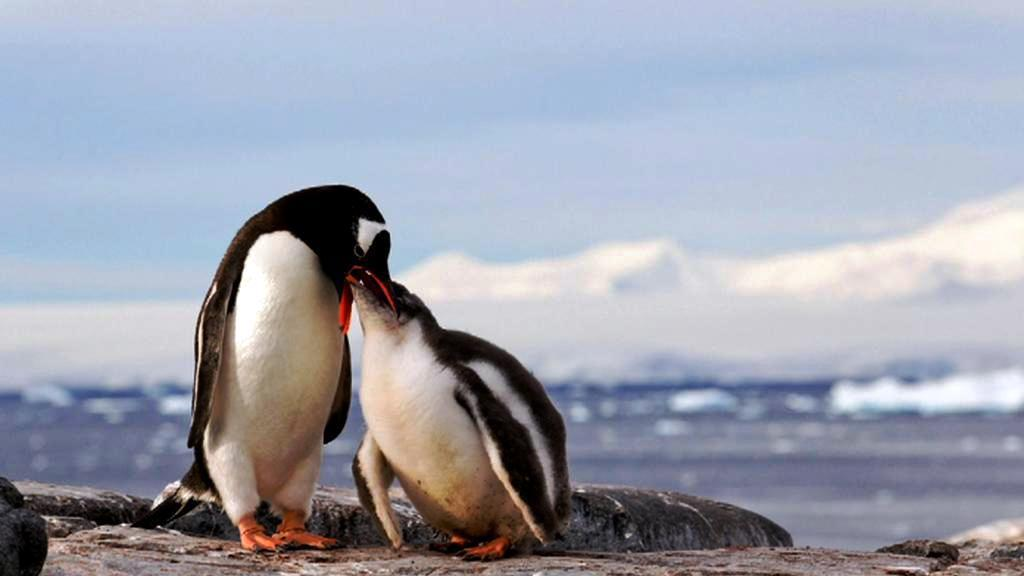 Život na Antarktidě