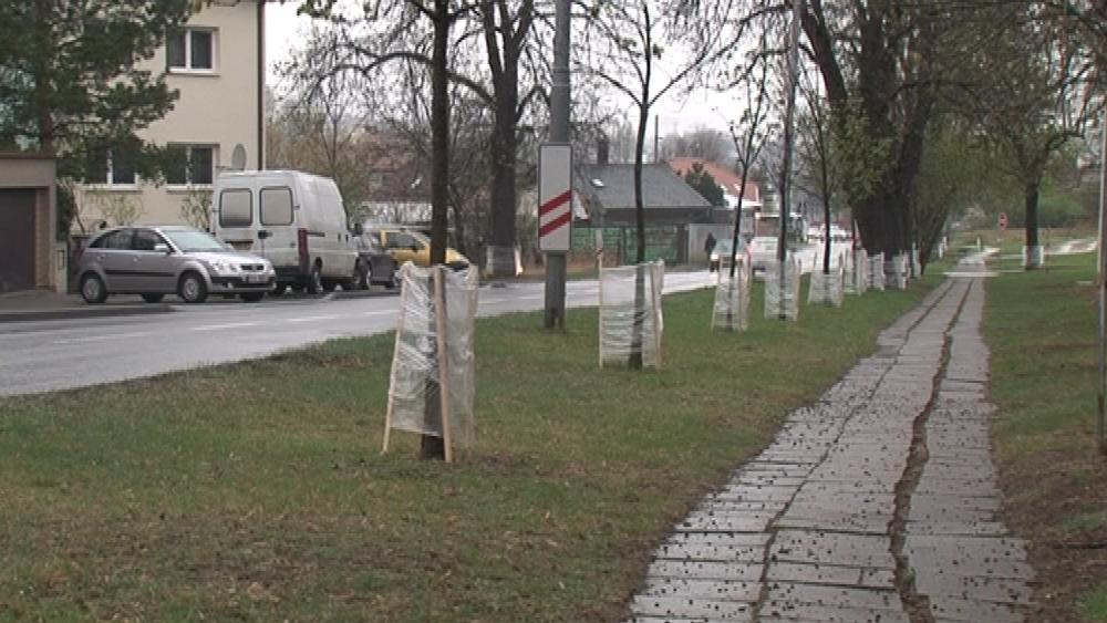 V Brně-Tuřanech bojují s klíněnkou pomocí chemického postřiku