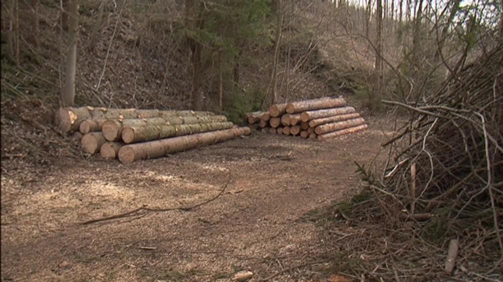 Vykácený les, který je součástí církevní restituce