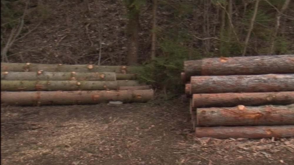 Vykácený les, který je součástí církevních restitucí