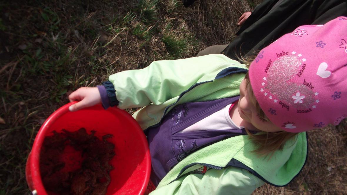 Dobrovolníci pomáhají přenášet žáby