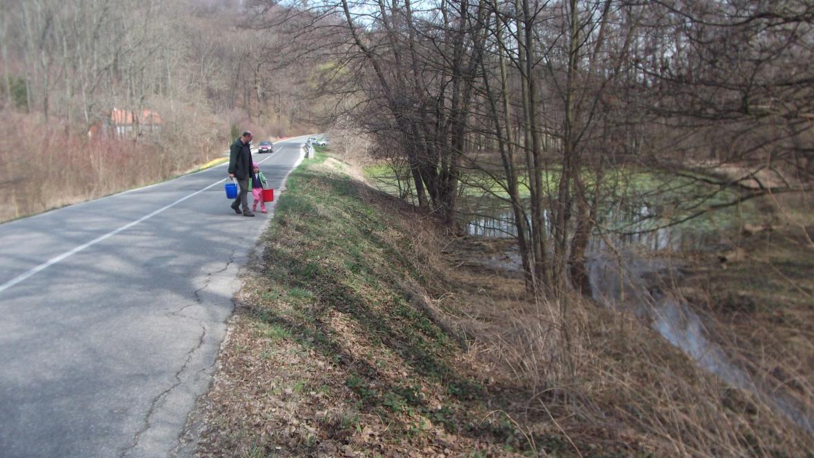 Dobrovolníci přenášejí žáby přes silnici