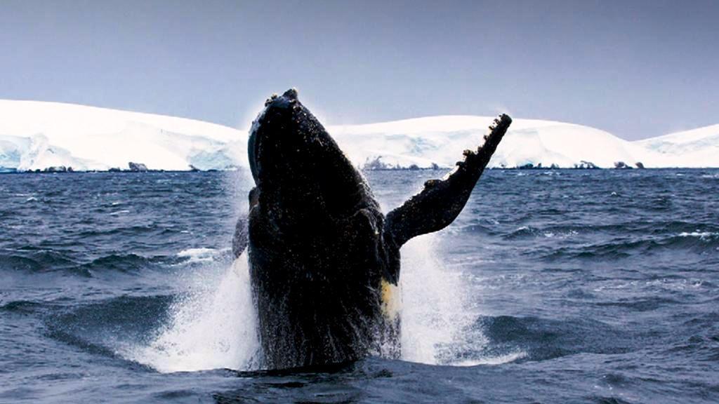Antarktida a její vodní svět