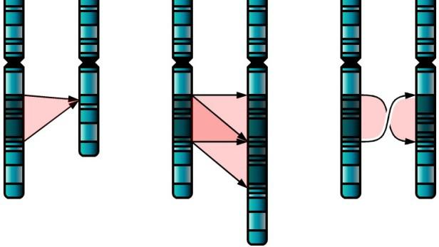 Chromozomové abnormality u autistů