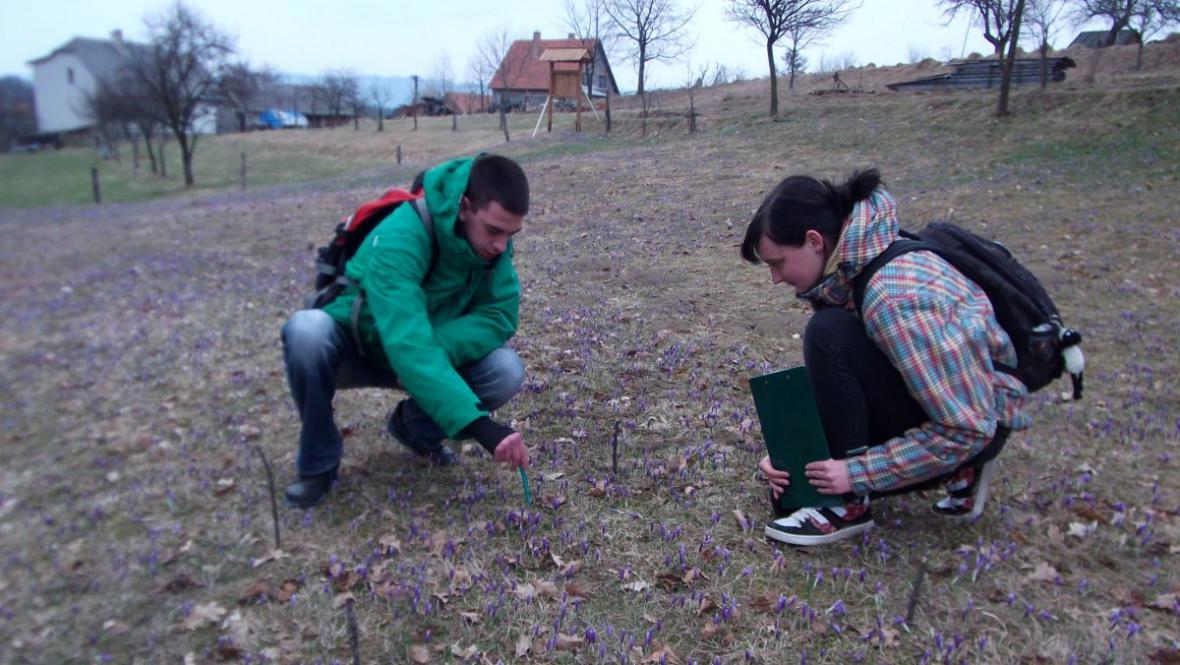 Na louku se šafránem se chodí dívat místní i lidé ze širokého okolí