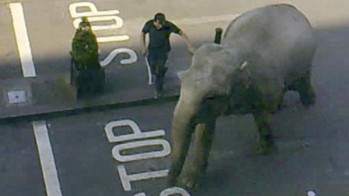 Slon utekl z cirkusu