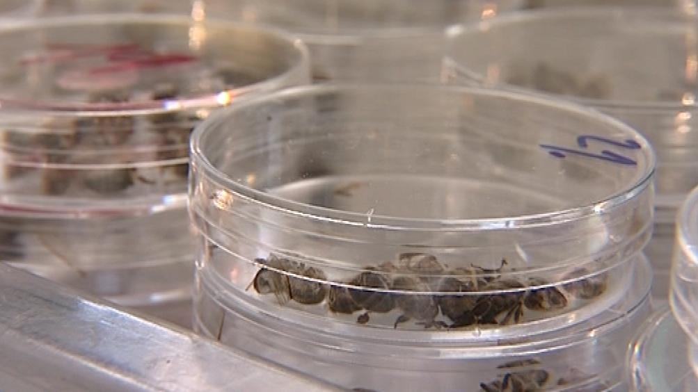 Uhynulé včely zkoumají vědci