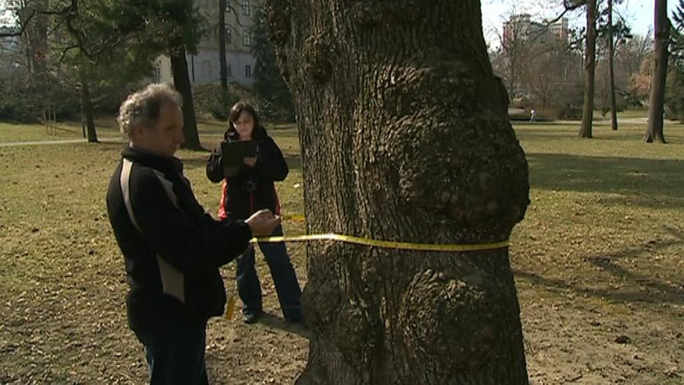 Kontrola čeká všech sto tisíc zlínských stromů