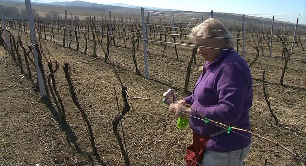 Vinohrad v Blatnici pod Svatým Antonínkem