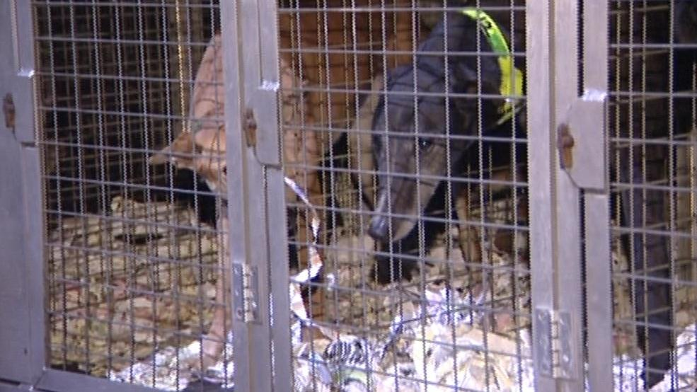 Zvířata najdou nový domov