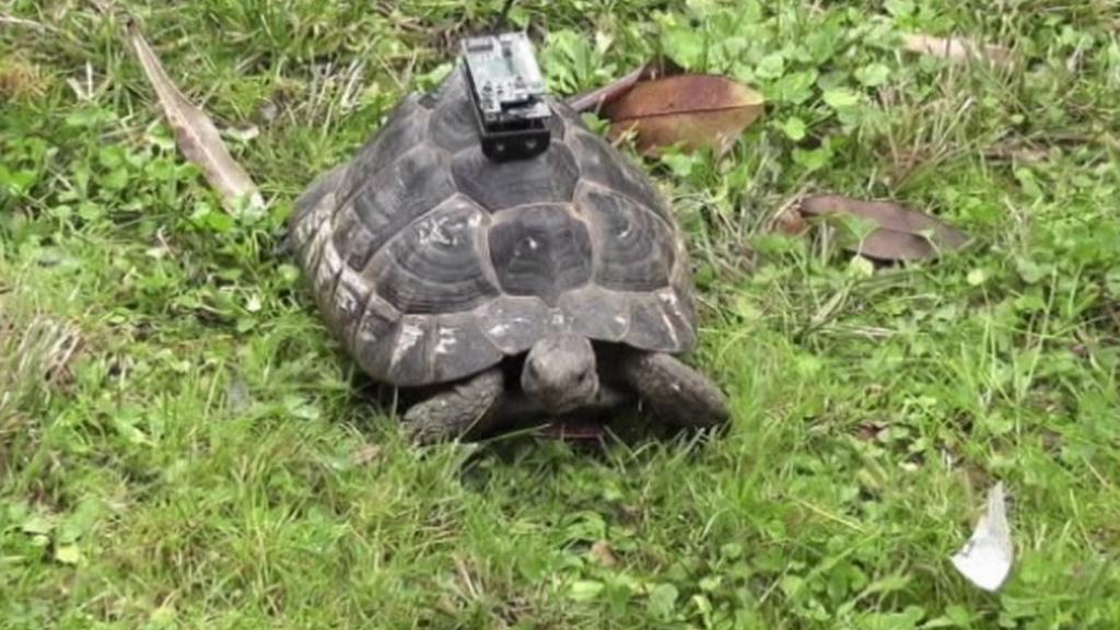 Želva s navigací