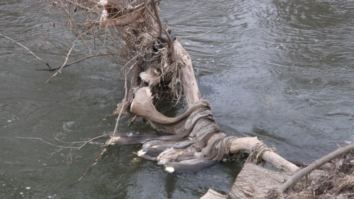 V okolí Medlova se povalovaly stovky zvířecích kůží
