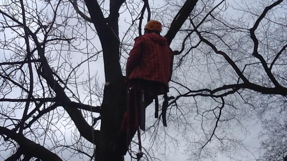 Průzkum stavu stromů ve slavkovském parku