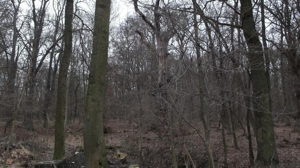 Na první pohled nevýrazný lesík byl před 200 lety zednářskou zahradou
