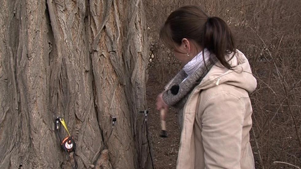 Testování zdraví stromu