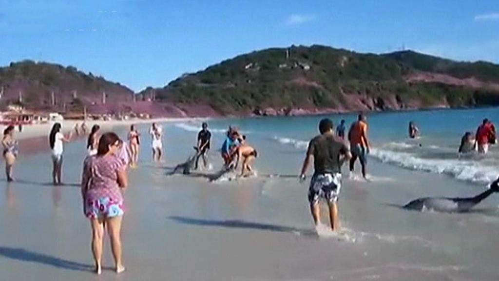 Lidé na pláži spontánně zachraňují delfíny