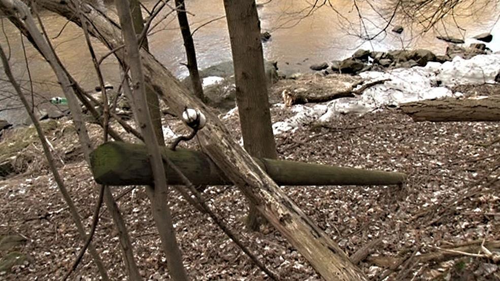 Lesníci likvidují v Podyjí nepůvodní dřeviny