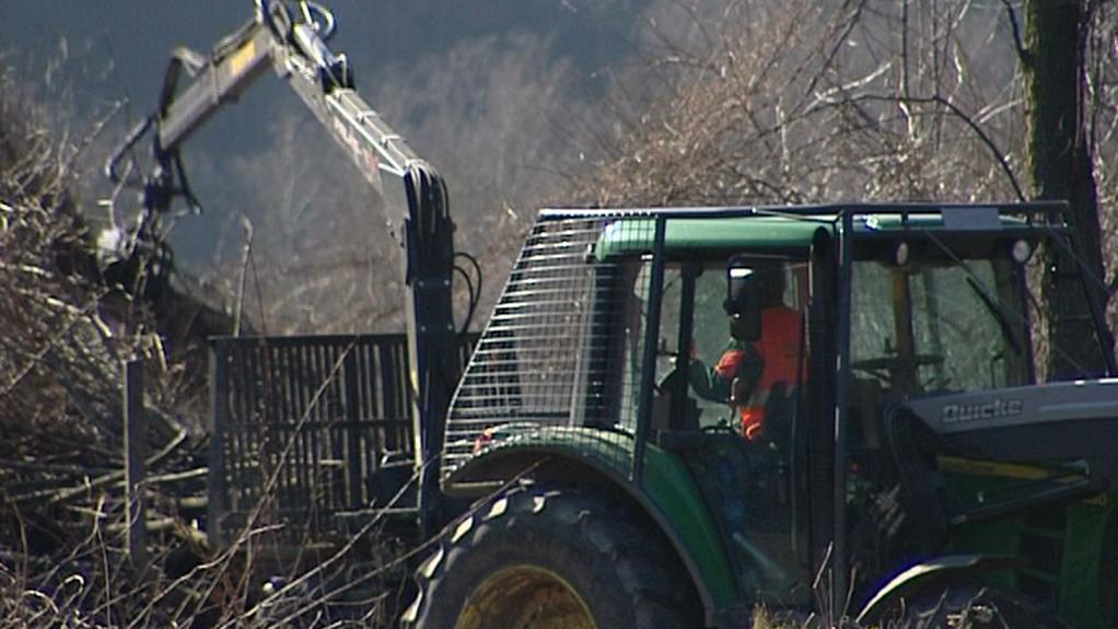 Kácení stromů v Ústí nad Orlicí