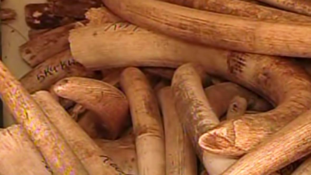 Zabavená slonovina