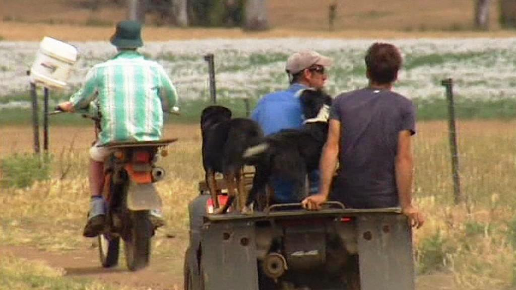 Australští farmáři