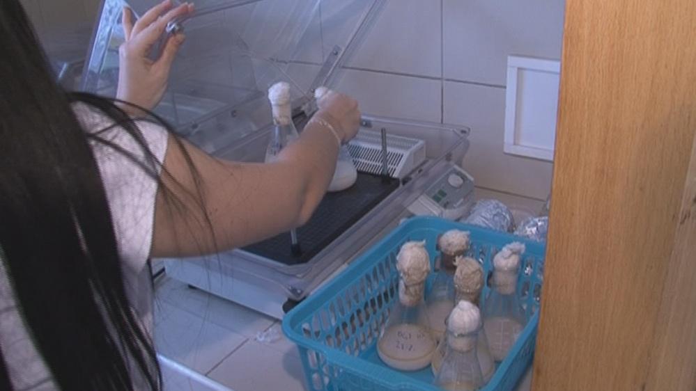 Vědci vyrábějí za pomoci bakterií bioplasty