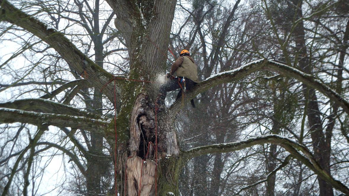 Práce arboristů v Podzámecké zahradě