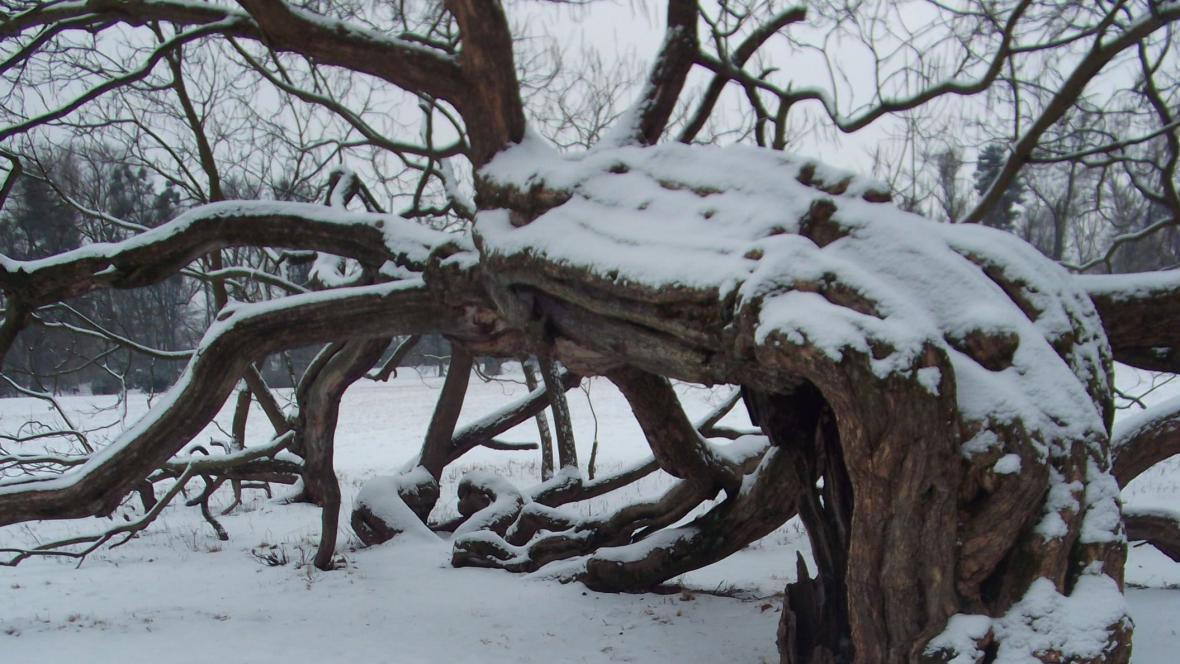 Stromy v Podzámecké zahradě