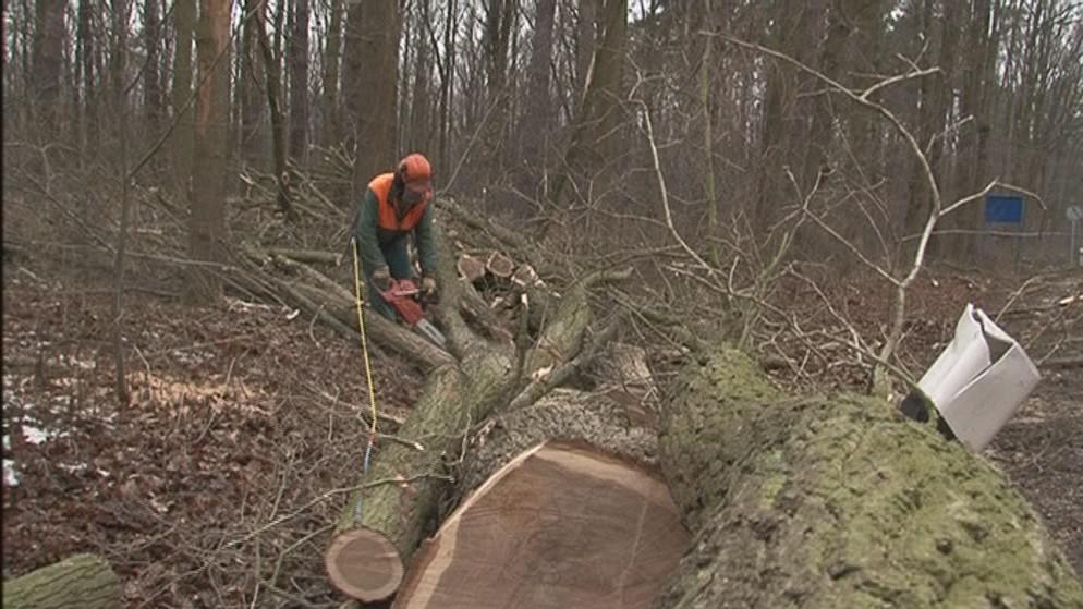 Stromy musí ustoupit cyklostezce, která propojí Dubňany a Hodonín