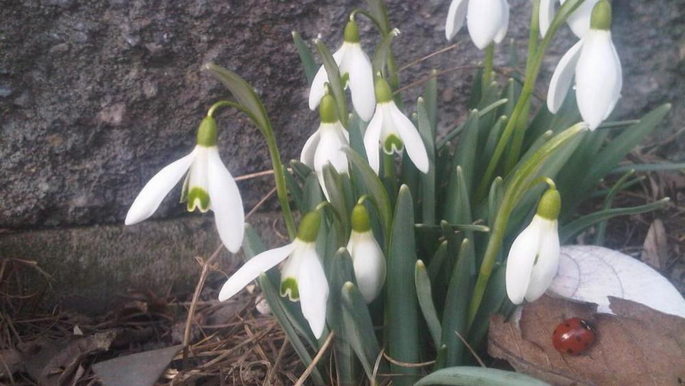 Jaro v Horním Jiřetíně