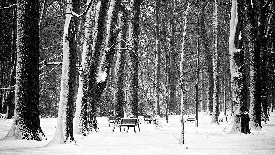 Bohumínský park 16. 2. 2012