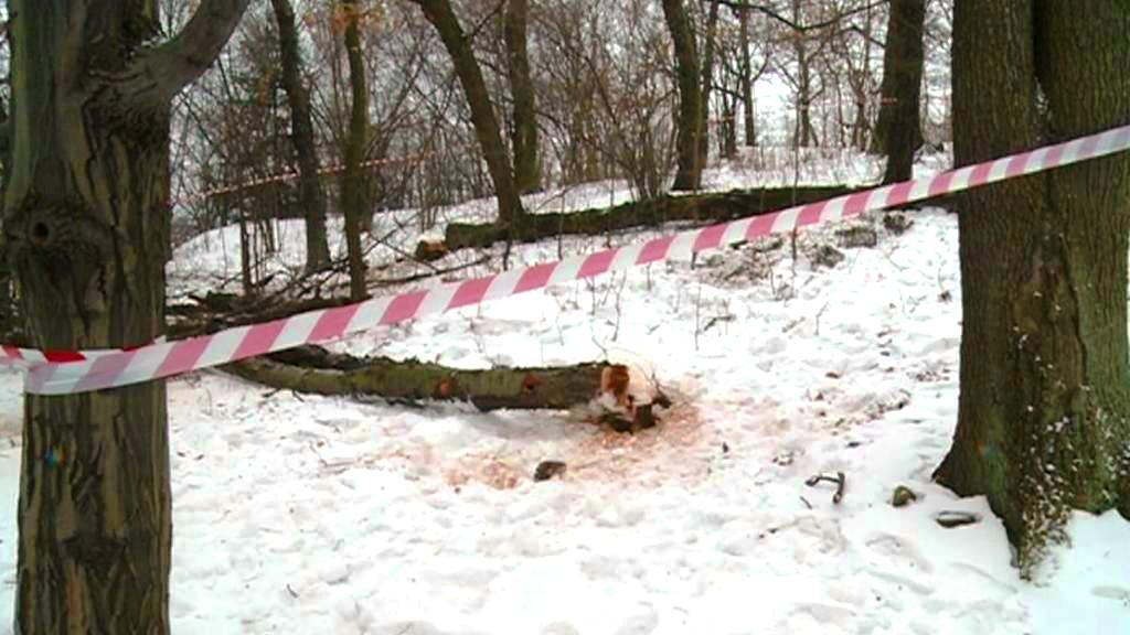 Spadlý strom