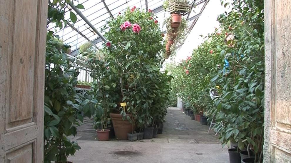 Zahradníci museli zateplit skleník, aby květiny nezmrzly