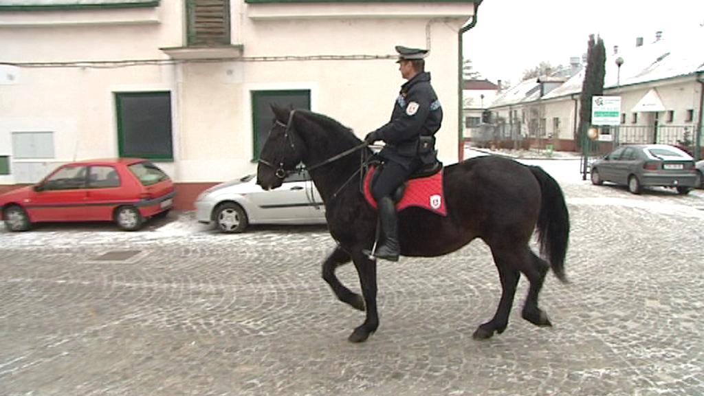 Pardubická jízdní policie