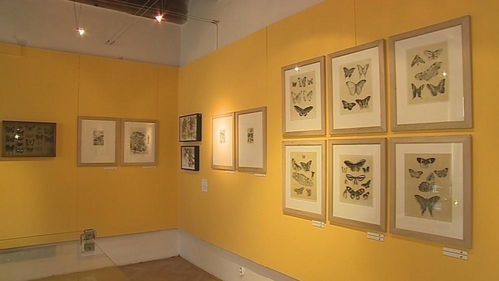 Výstava Křídla motýlí v Kroměříži