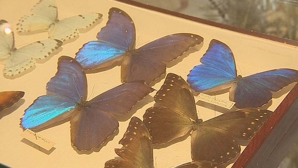 Sbírka motýlů Josefa Poly