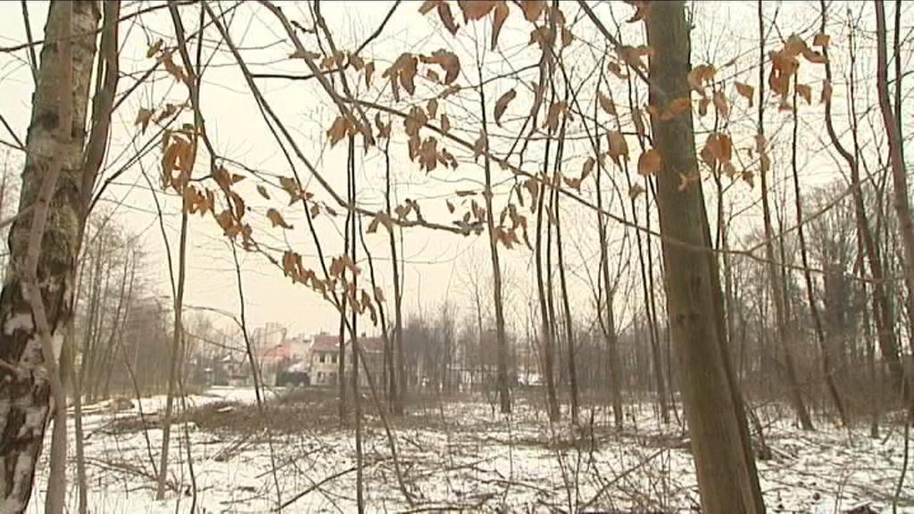 Ostrava vysadí 0,5 mil. stromů