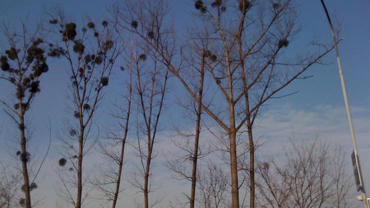 Některé stromy měří až 30 metrů