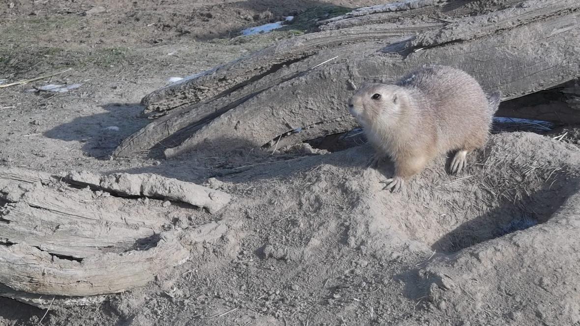 Zvířata v brněnské zoo snášejí zimu dobře