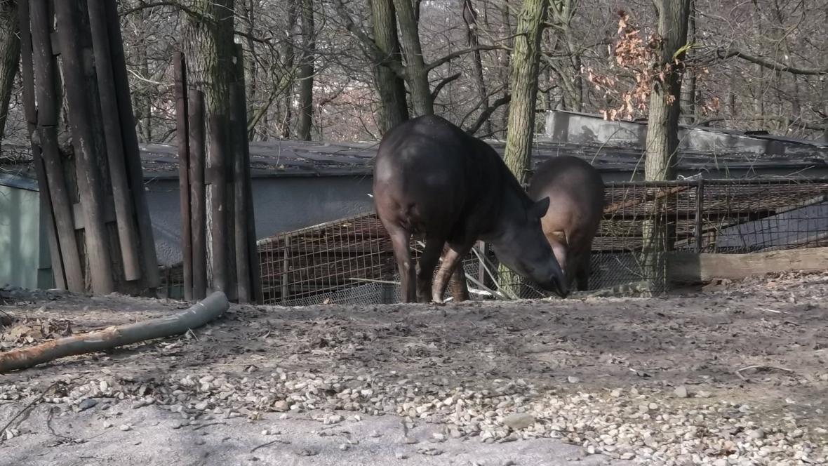 Více než zvířata trpí lidé a technika, tvrdí chovatelé