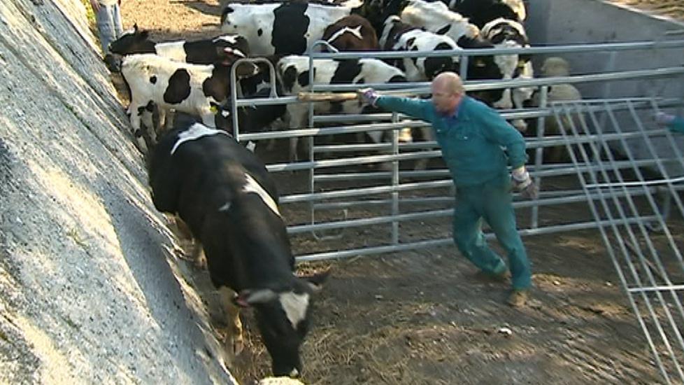 Zvířata na farmě v Břestku