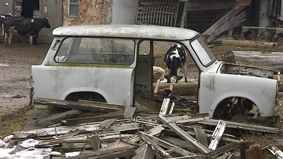 Zvířata se mohla na mnoha místech zranit