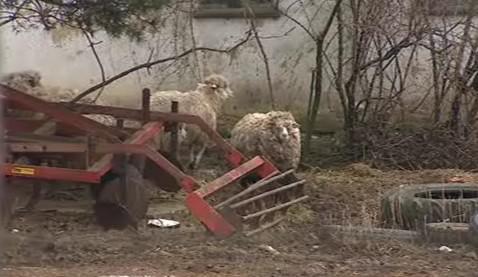 Zvířata se volně pohybují mezi zemědělskými stroji