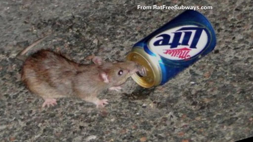 Soutěž o nejodpornějšího potkana