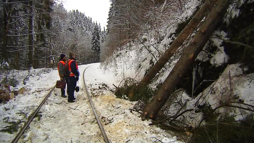 Odklízení stromů z vlakové trati