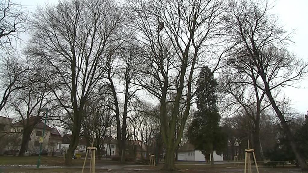 Smetanovy sady v Uherském Hradišti