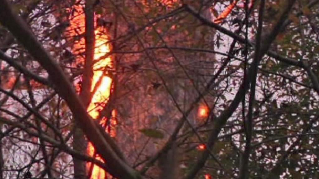 Požár rekordního cypřiše