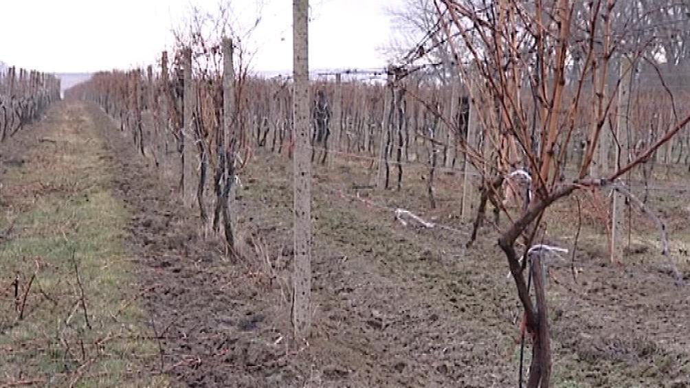 Z vinic mizí kovové tyče